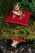 Princefrog